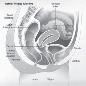 endometriosis common inflammatory disease diagram