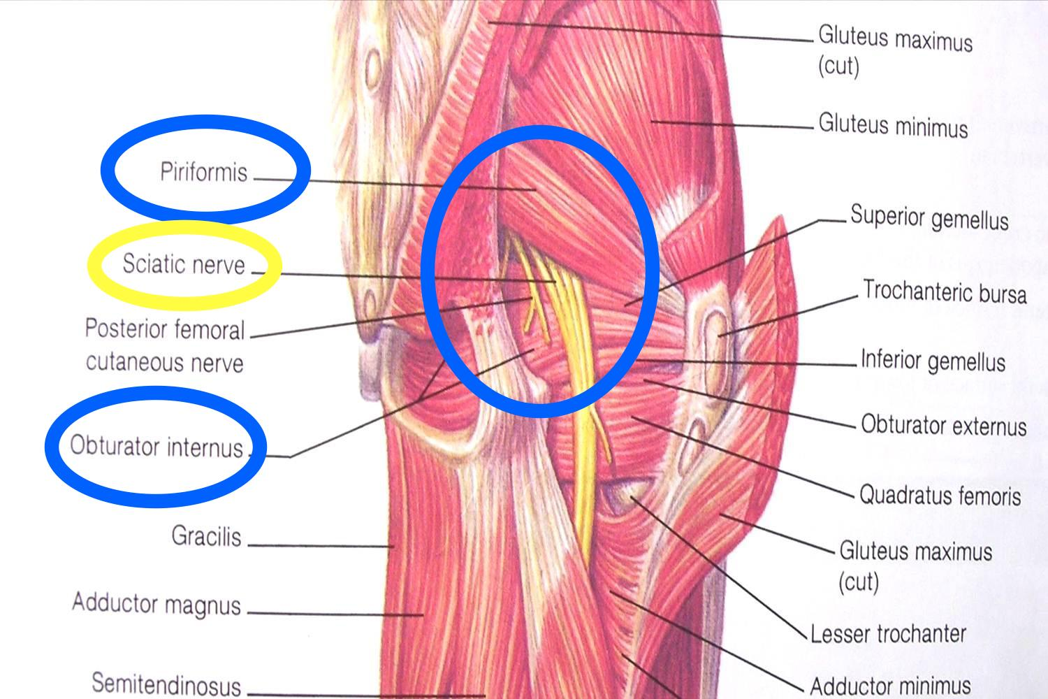 SCIATICA AND ENDOMETRIOSIS - April 17